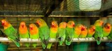 029b6-birdmarket-9